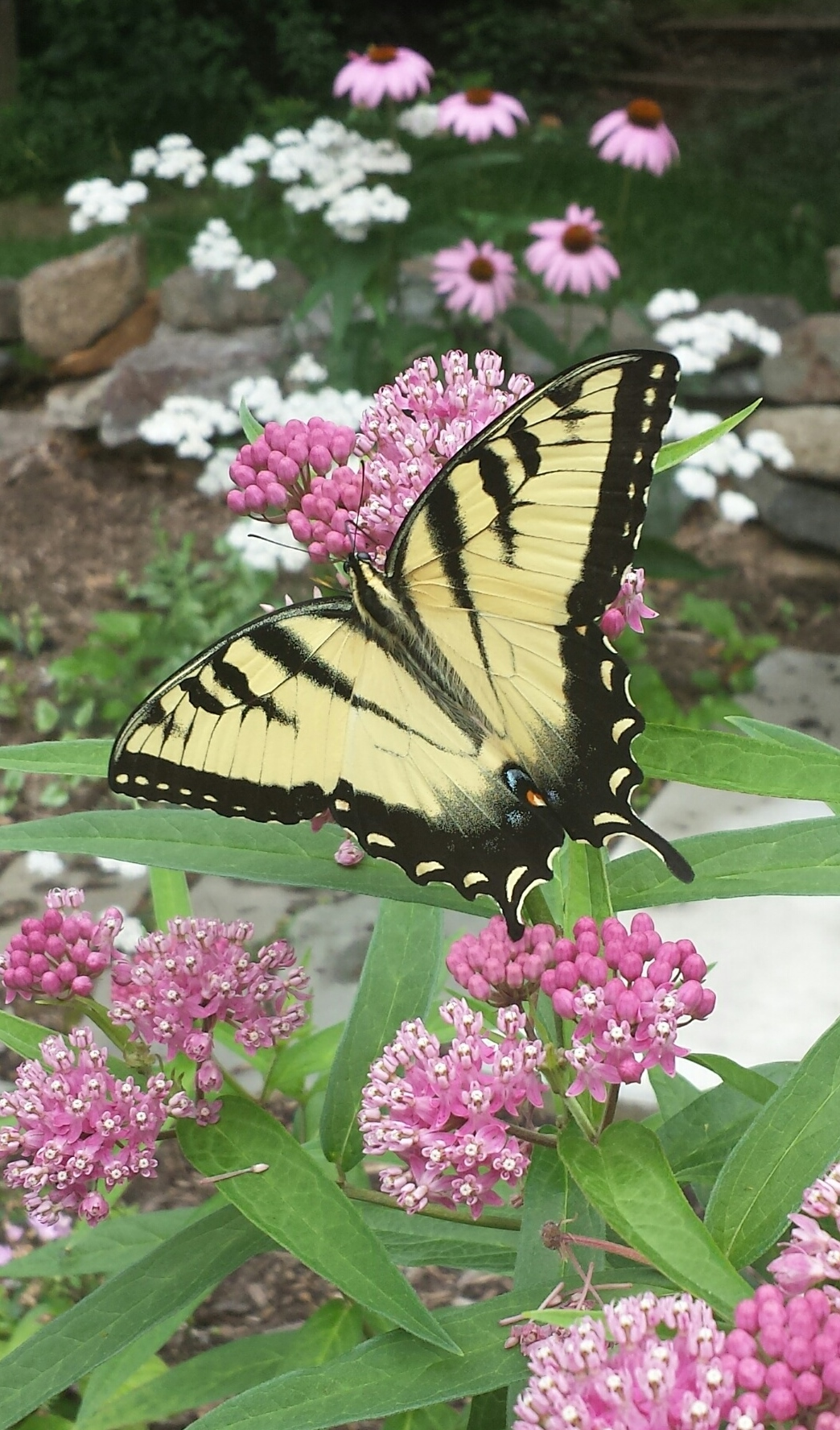 Trailside's New Butterfly Garden