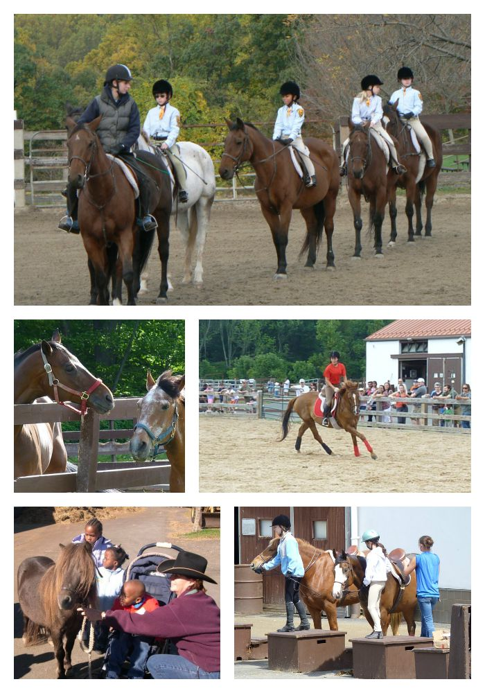 Watchung Stable collage