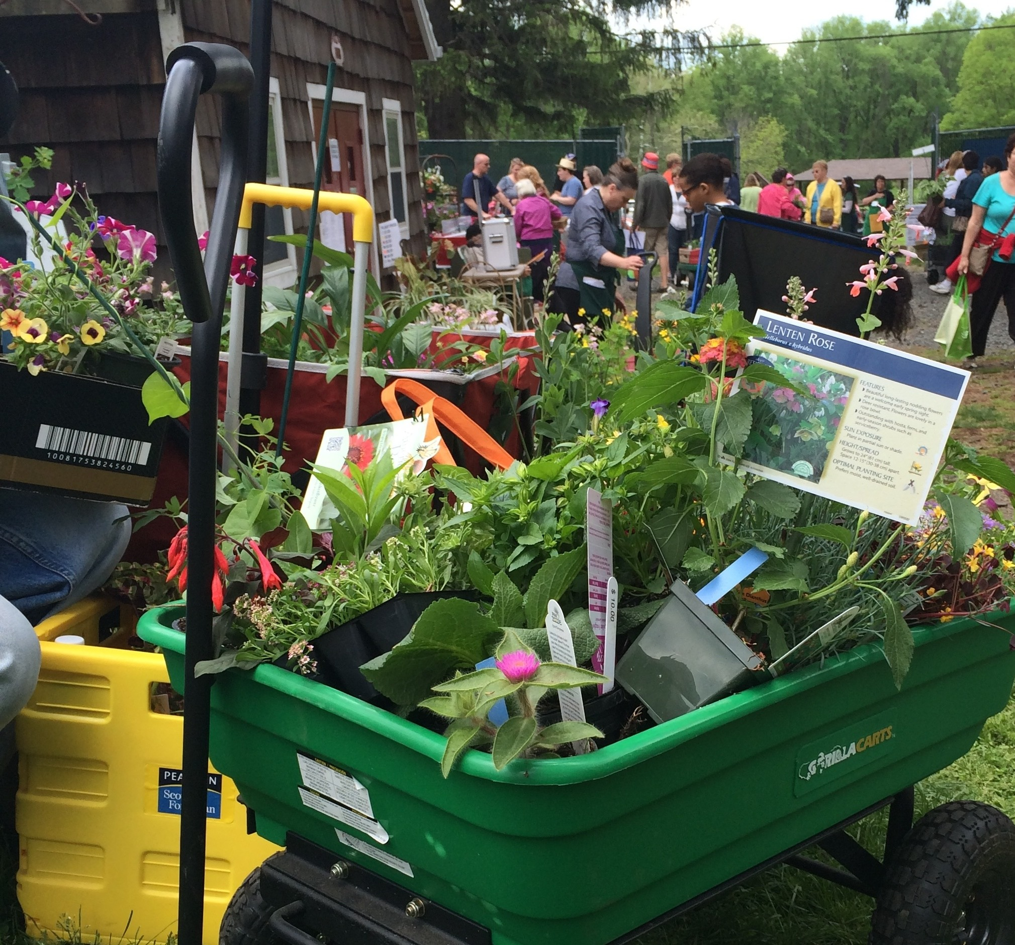 Roses In Garden: 52 Great Things To Do In Union County This Year