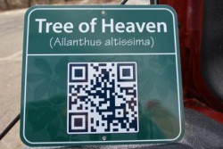 "ENGLISH, LATIN & QR CODING...make it possible to learn all about the trees in Union County parks.  Master Tree Stewards have created ""tree trails"" in Lenape, Echo Lake and Nomahegan Parks, with a fourth planned for Briant Park."