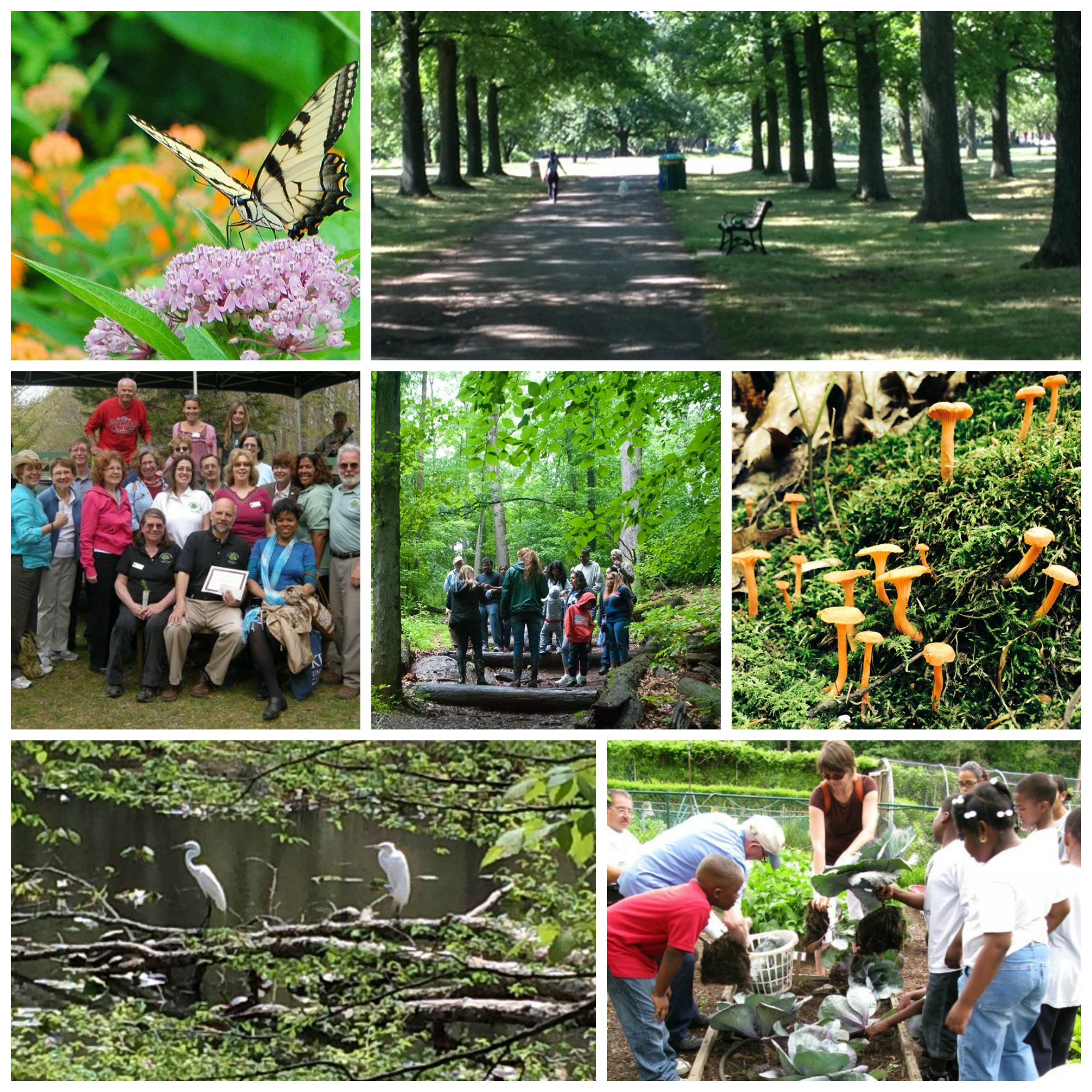 Go4Life Senior Fitness in Union County Parks (collage)