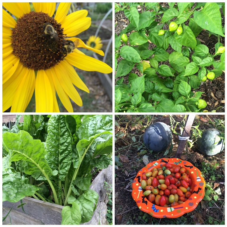 Apply Now for a Union County Community Garden Grant – County of ...